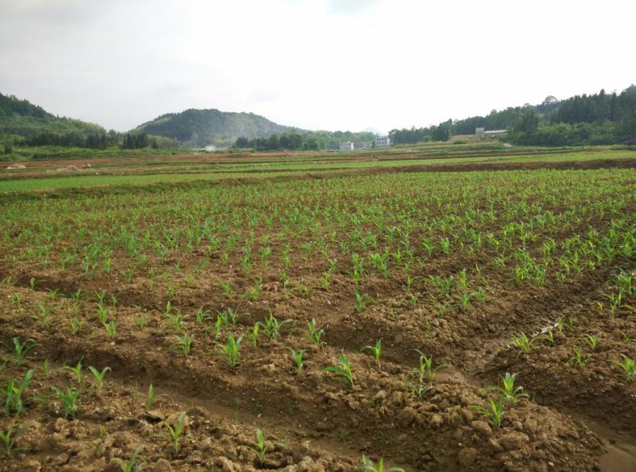 土地整理項目